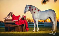 Barn Farm horse photoshoot